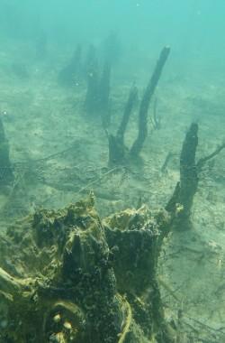 Troncs d'arbres immergés 2