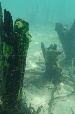 Troncs d'arbres immergés