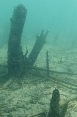 Troncs d'arbres immergés 3