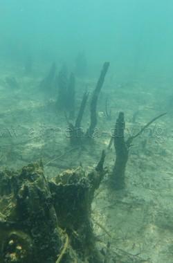 Troncs d'arbres immergés 4