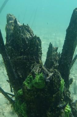 Troncs d'arbres immergés 5